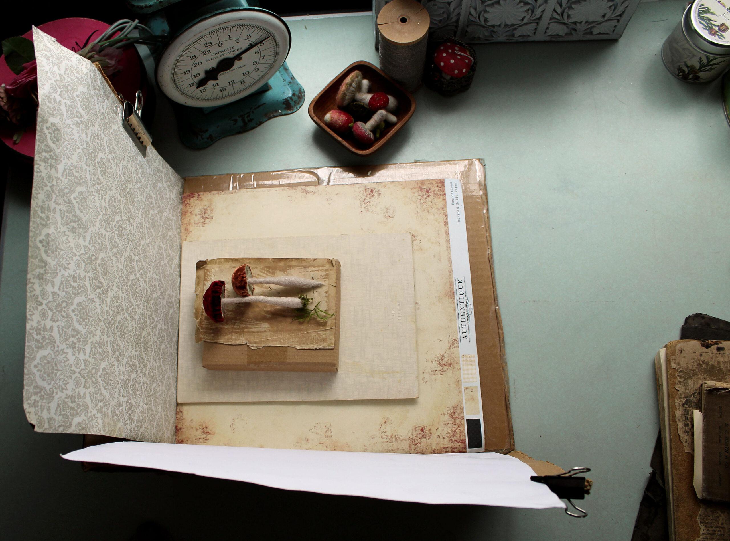 Foto box za prirodno svetlo